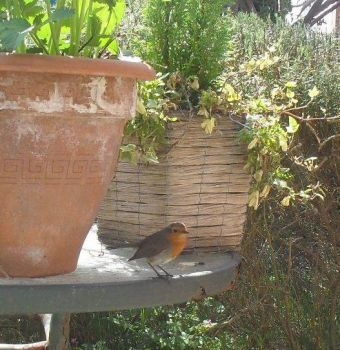 The Robin from Cyprus Avenue VII