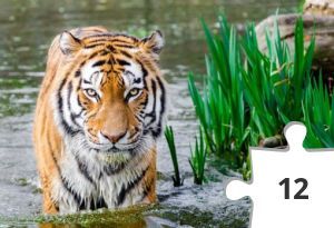 Jigsaw puzzle - Tiger by Flickr