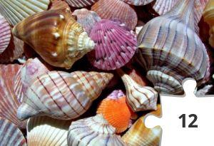 Jigsaw puzzle - Seashells