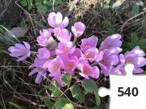 Jigsaw puzzle - # 35 Stjernen
