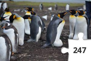 Jigsaw puzzle - penguins-5414467_1920