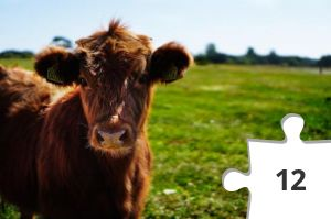 Jigsaw puzzle - brown-cattle-on-green-lawn-grass-during-daytime-162240