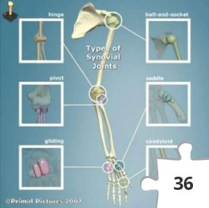 Jigsaw puzzle - Types of Synovial Joints