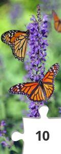Jigsaw puzzle - Butterflies by Cindy Gustafson