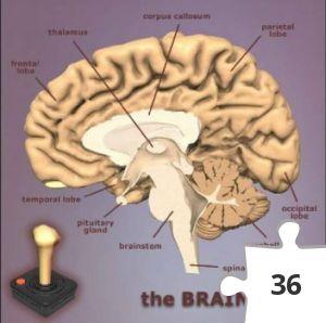 Jigsaw puzzle - The Brain