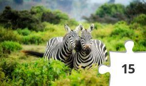 Jigsaw puzzle - Zebras by Pixabay