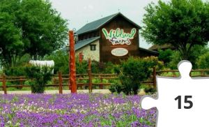 Jigsaw puzzle - Wildseed Farms in Fredericksburg