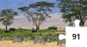 Jigsaw puzzle - Zebras,_Serengeti_savana_plains,_Tanzania