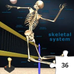 Jigsaw puzzle - Skeletal System