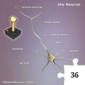 Jigsaw puzzle - The Neuron