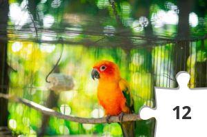 Jigsaw puzzle - Orange Bird by Huỳnh Đạt