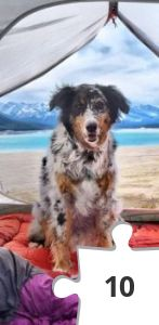 Jigsaw puzzle - Tips for Camping with Your Dog by Kurgo