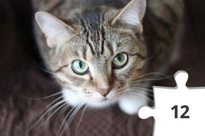 Jigsaw puzzle - Cat Whiskers Tabby by Krysten Merriman