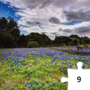Jigsaw puzzle - Bluebonnet & sky.jpg
