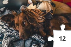 Jigsaw puzzle - Adorable Dogs by Burst