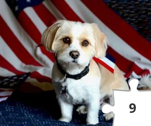 Jigsaw puzzle - Patriotic Doggie by hpromise-Jean Kohut' at Flickr
