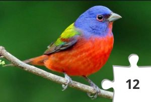 Jigsaw puzzle - Painted Bunting by The Cornell Lab of Ornithology