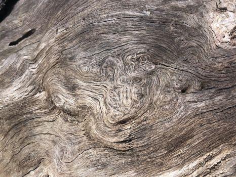 Nature's Van Gogh