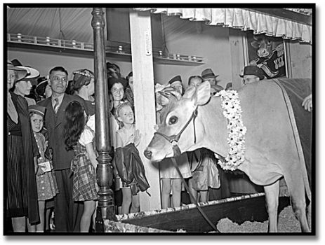 The real Elsie the Cow at the CNE in 1941