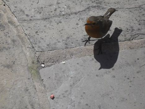 The Robin from Cyprus Avenue V